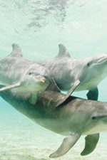 The Soul in the Sea: Re-Uniting with the Dolphins