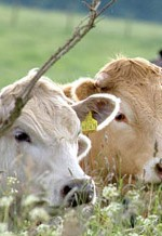 Change Your Diet & Help Save Animals From a Life of Suffering